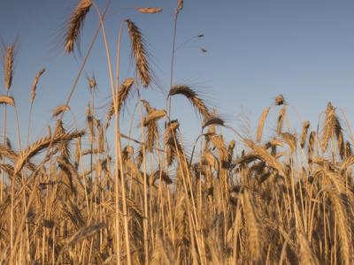 El Govern destina 7,66 M€ per impulsar la diversificació econòmica de les zones rurals