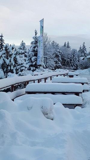 la Molina nevada