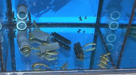 Aquari de Torreferrussa