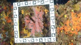 Estudi del corall