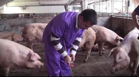 Inspecció ambiental a una granja.