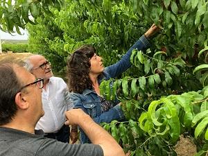 La consellera Jordà durant la visita a la plantació de fruiters