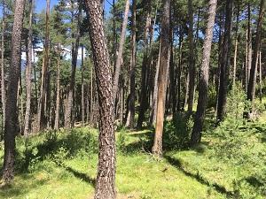 Un dels boscos amb lots de fusta subhastats del Berguedà
