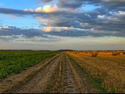 El Govern destina més de 64 milions d'euros per fomentar la viabilitat de les explotacions agràries