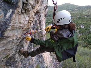 Agent Rural del Grup de Suport de Muntanya (GSM) durant les tasques de retirada del material d'escalada