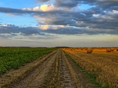 El Govern destina més de 36 milions d'euros per fomentar el sector agrícola, ramader, forestal i pesquer de Catalunya