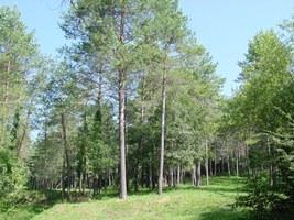 Imatge dels boscos