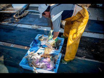 Peix amb plàstic