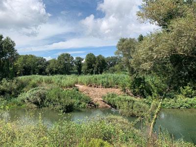 Riu Fluvià als aiguamolls Empordà.
