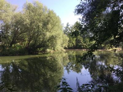 Salzeda riu Ter a l'assut de Gallifa.