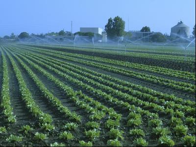 El Departament d'Agricultura ha abonat 306,2 M€ en concepte d'ajuts directes i ajuts relatius a la sostenibilitat agrària per la campanya 2019