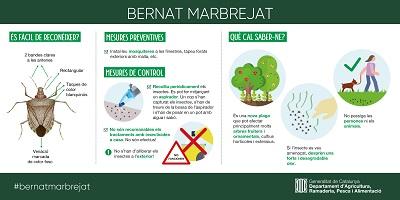Infografia sobre el Bernat Marbrejat