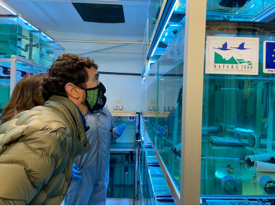 El conseller Calvet observa els aquaris del Centre de Fauna de Pont de Suert on s'hi cria en captivitat el tritó del Montseny.