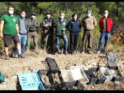 Alliberament de tortugues Montsant