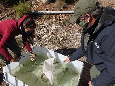 Moment de l'alliberament de peixos a la Palma d'Ebre