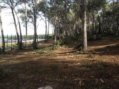 Treballs d'autoprotecció d'incendis forestals a Mas d'Enric