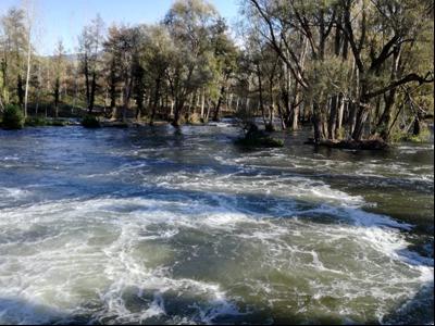 El riu Ter, aigua avall del Pasteral, amb el cabal màxim alliberat de 70 m3/s.