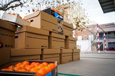 Detall de les mandarines al pati de l'escola d'Alcanar