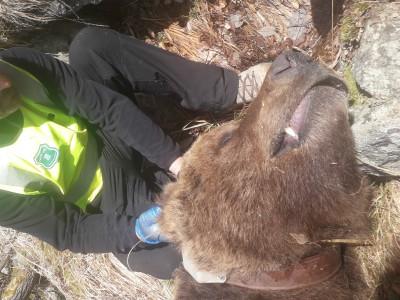 Investigació mort os Cachou