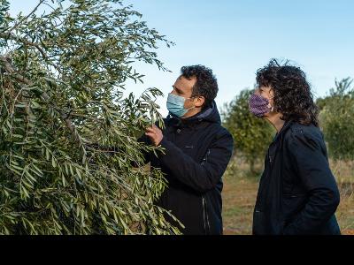 La consellera d'Agricultura durant la visita que va fer a la finca d'oliveres afectada pel temporal a la Terra Alta