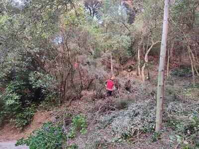 Moment de la realització dels treballs forestals