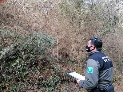 Un Agent Rural fent valoracions de l'afectació de la plaga als boixos