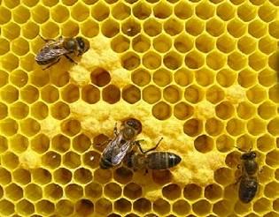Foto web NdP apicultura