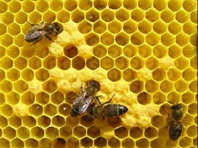 Miniatura NdP apicultura