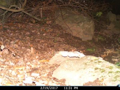 Imatge captada al PNIN de l'Albera