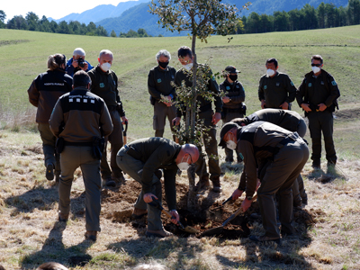 Agents rurals plantant l'arbre