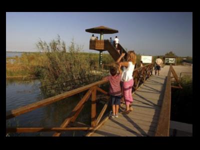 Observació d'ocells al parc natural del Delta de l'ebre