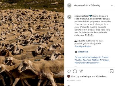 Campanya difusió a instagram