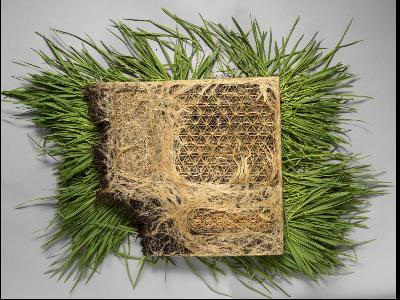 Interwoven, de Diane Scherer, realitzat amb patrons vegetals