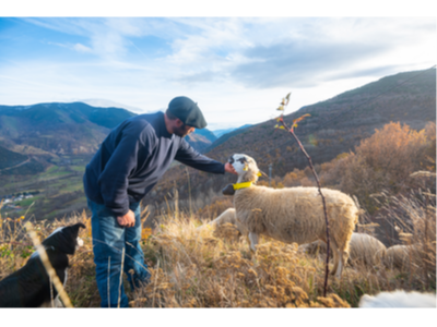 Un ramader amb una de les seves ovelles de raça xisqueta