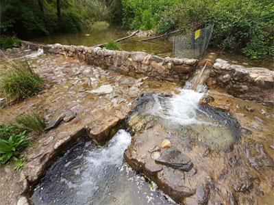 Escala de peixos a la resclosa del Molinot (riu Borró), a Sant Ferriol (Garrotxa).