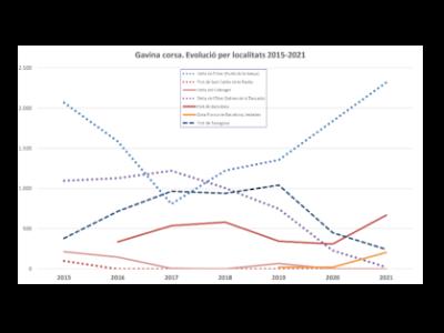 Estadística cens gavina corsa