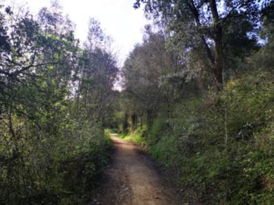 Imatge de recus d'un camí de muntanya