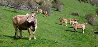 Foto web NdP pagament ramaderia ecològica 2020