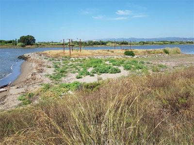 Franja de sediments entre l'illa del Molí i el marge esquerre del riu Llobregat.