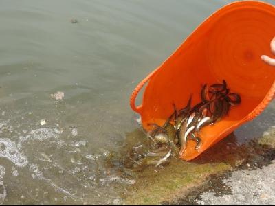 Alliberament peixos autòctons per recuperar les seves poblacions i fomentar la pesca sostenible d'aquestes espècies