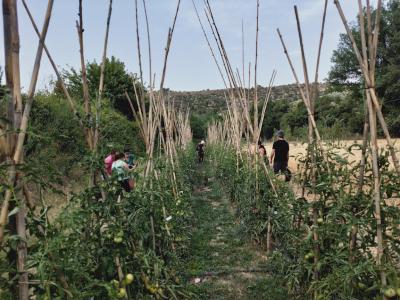 Les varietats locals de fruites, verdures i hortalisses són una part essencial del patrimoni agrícola de Catalunya