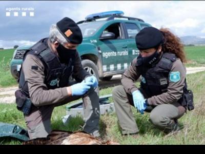 Agents Rurals investigant la presència d'esquers enverinats.